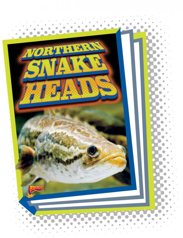 Northern Snakeheads (Paperback)
